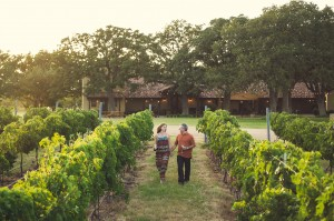 A vineyard in Texas Hill Country. Photo by Blake Mistich.