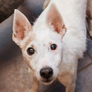 Animals like this wirehaired fox terrier named Ditto are in desperate need of a home.